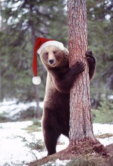 Brown Bear - hugging tree, wearing Christmas hat.