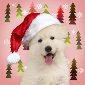 Dog White Swiss Shepherd puppy wearing Christmas hat