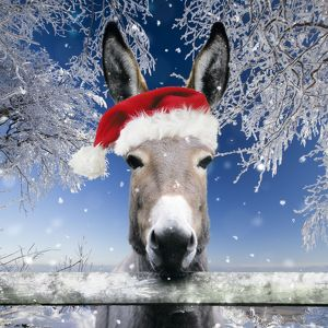 Donkey - looking over fence wearing Christmas hat in snow