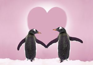 Gentoo Penguin - pair 'holding hands' in the snow with pink heart