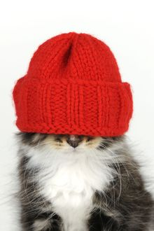JD-20687 Cat - Kitten wearing red hat over eyes