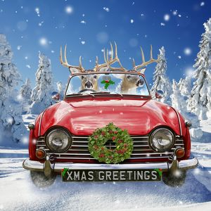 Deer - driving car through Christmas winter scene