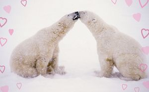 Polar Bears with pink hearts
