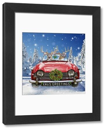 Polar Bears - driving car through winter scene smiling and waving wearing Christmas hats