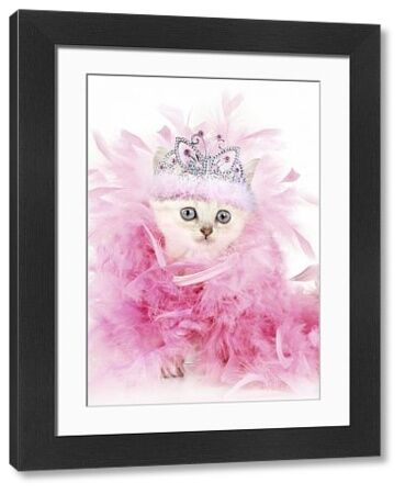 Cat. Asian. Chocolate classic tabby kitten (8 weeks) with feather boa and tiara Digital manipulation Date