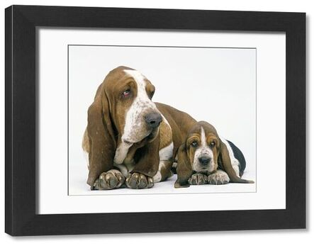 LA-1307 Dog - Basset Hound, adult with puppy Jean Michel Labat Please note that prints are for personal display purposes only and may not be reproduced in any way