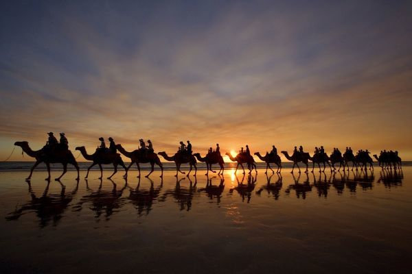 SAS-1154 Camel safari - famous camel safari on Broom's Cable Beach at sunset with camels reflecting on wet beach Cable Beach, Broome, Western Australia, Australia Steffen & Alexandra Sailer Please note that prints are for personal display purposes only