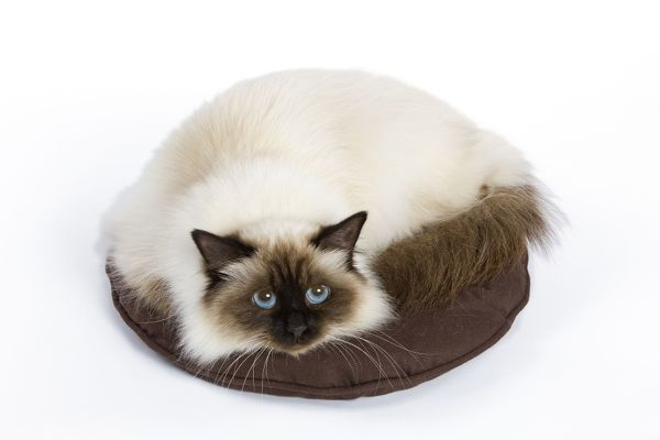 LA-6307 Cat - Birman - curled up on pillow / cushion Jean-Michel Labat Please note that prints are for personal display purposes only and may not be reproduced in any way