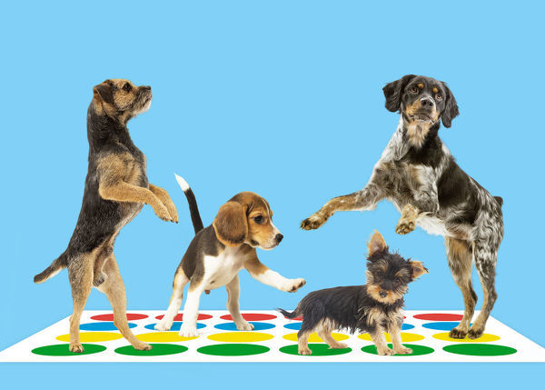 Four dogs on Twister mat Four dogs on Twister
