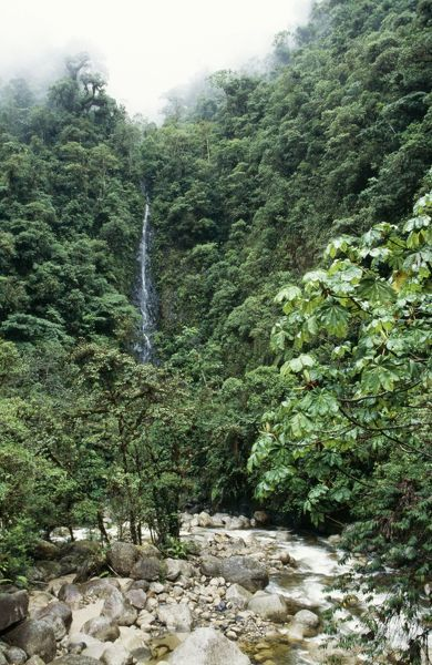 FG-8856 PERU - Waterfall in the Cloud Forest