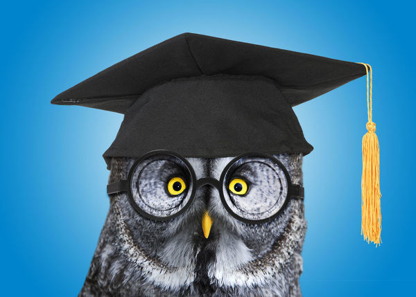 Great Grey Owl, wearing glasses and mortar board Date