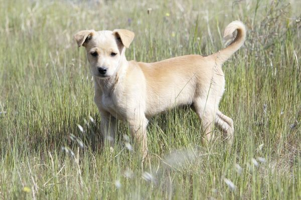 USH-4021 Mongrel Dog - puppy region of Alentejo, Portugal Duncan Usher Please note that prints are for personal display purposes only and may not be reproduced in anyway
