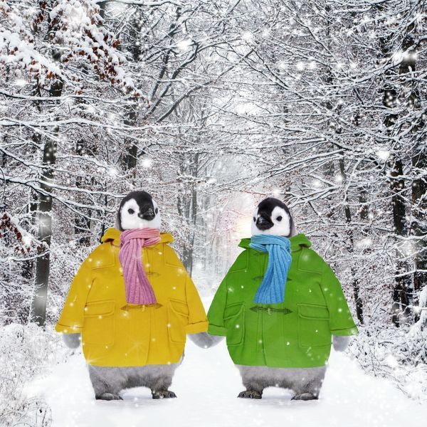 USH-4674-M2-C Penguins - in duffle coats & scarves - holding hands Digitally Manipulated image Ardea London
