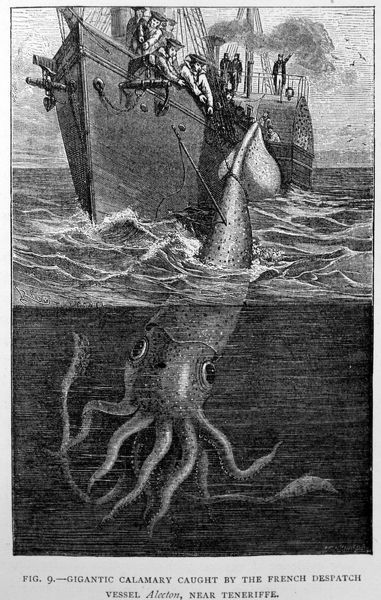 PM-9706 Black & White Illustration: Giant squid - historic specimen 2 cephalopod molluscs Architeuthis sp. mythical beasts sea montsers Pat Morris Please note that prints are for personal display purposes only and may not be reproduced in any way