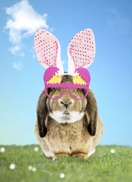 Rabbit wearing Bunny ears and spring glasses in spring scene Date
