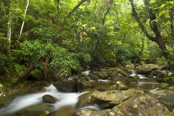 SAS-1658 River in rainforest - water flows over moss-covered boulders through lush tropical rainforest Daintree National Park, Wet Tropics World Heritage Area, Queensland, Australia  Steffen & Alexandra Sailer Please note that prints are for