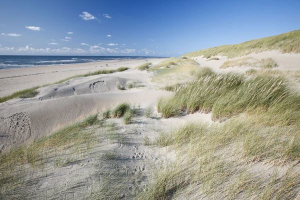 USH-4650 Sand Dunes and Marram Grass - on empty beach  Island of Texel - Holland Duncan Usher Please note that prints are for personal display purposes only and may not be reproduced in any way