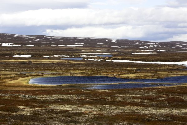 WAT-12370 Norway - tundra landscape at edge of Varanger Fjord  North Norway M. Watson Please note that prints are for personal display purposes only and may not be reproduced in anyway