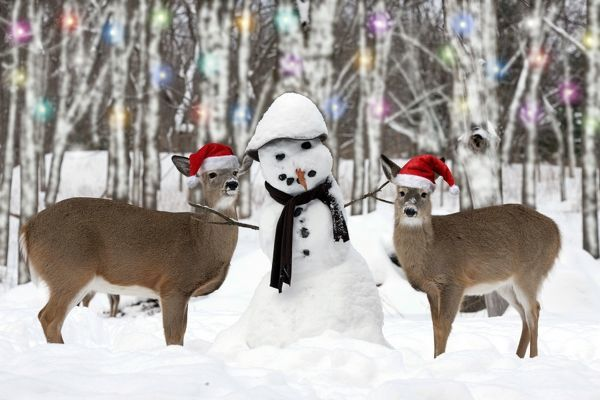 White-tailed Deer with snowman New York, USA Digital Manipulation Digital Manipulation Date