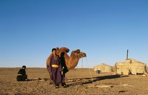 BACTRIAN CAMEL - and nomad
