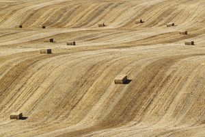 Bales of straw and abstract patterns in a cornfield afte