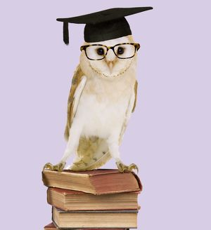 Barn Owl - with books - wearing glasses & mortar board
