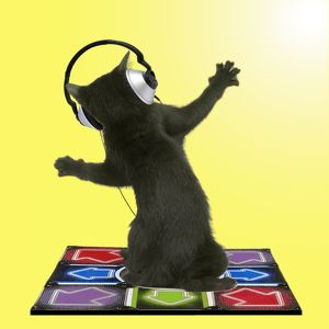 Black Bombay cat kitten dancing on dance mat with headphones