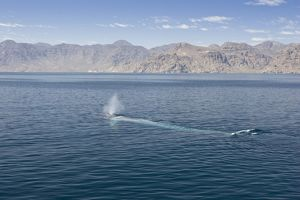 Blue Whale - underwater as seen from above