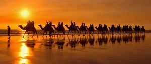 Camel safari - famous camel safari on Broom's Cable Beach at sunset with camels