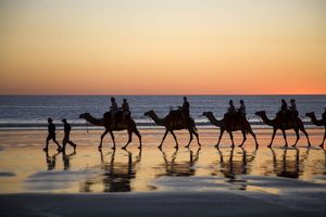 landscapes/camel train taking tourists ride cable beach