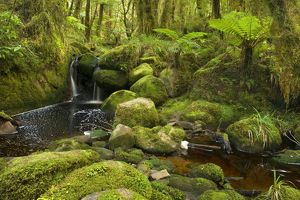 landscapes/cascade rainforest small waterfall brook meandering