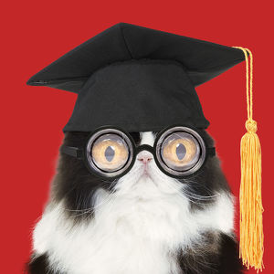 Cat - Black and White Persian wearing glasses