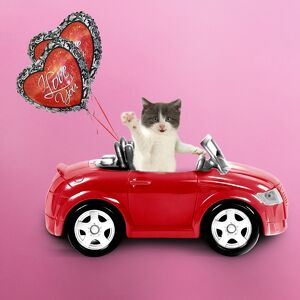 Cat driving red car with heart shaped I love you balloons