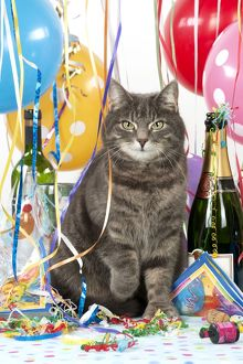 CAT - Grey tabby cat in a party set