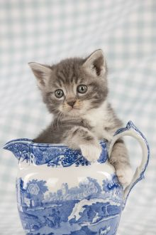 Cat - Grey Tabby kitten sitting in china jug