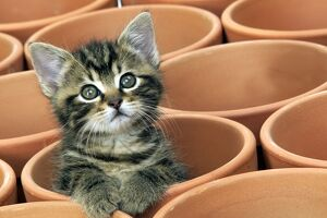 CAT- Kitten in flower pot