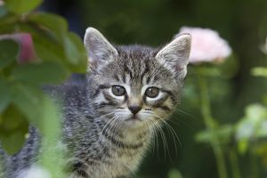 Cat - kitten portrait - outdoors