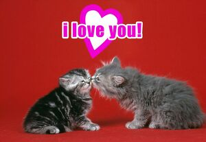 Cat - Kittens kissing under a valentines heart