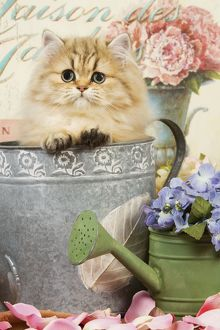 Cat - Persian kitten in flowerpot