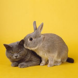 Cat & Rabbit - captionable Easter image