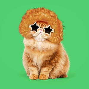 Cat - Red Persian wearing ginger wig and gold star