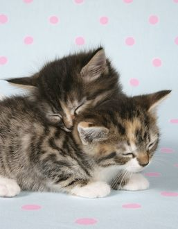 Cat - two sleepy kittens