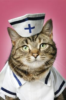 CAT. Tabby cat dressed as nurse