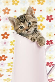 CAT - Tabby kitten in pink jug