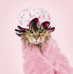 CAT. Tiffanie, wet wrapped in a pink towel and bath hat