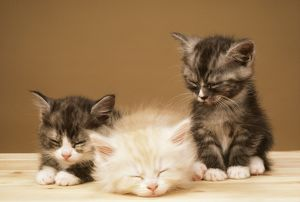 CATS - three kittens