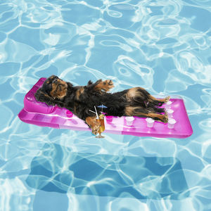 Cavalier King Charles Spaniel dog lounging on lilo