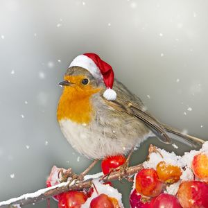Christmas scene in winter of a Robin wearing a Santa hat