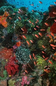 Colourful coral scene underwater