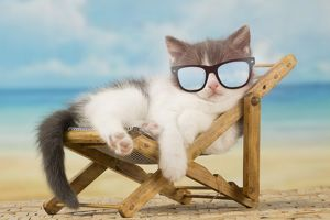 Cut kitten wearing sunglasses sleeping in a deckchair on holiday